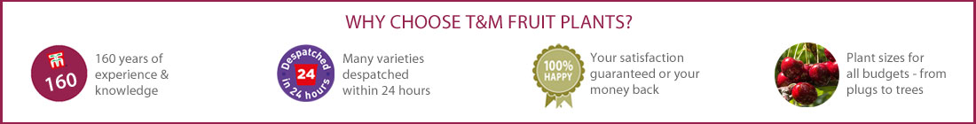Why Choose T&M Fruit Plants