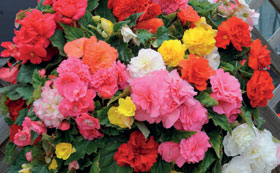 Bedding Suitable for Containers
