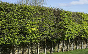 Hedging By Height