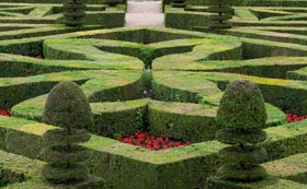 Formal & Topiary Hedging