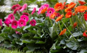 Superb Border Perennials