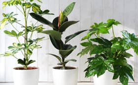 House Plants | Indoor Plants