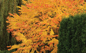 Autumn Colour Trees