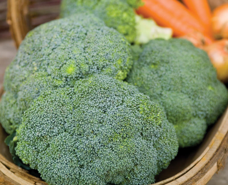 Broccoli 'Green Magic'
