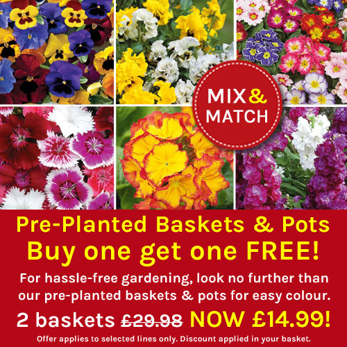 Hanging Baskets Mix 'n' Match