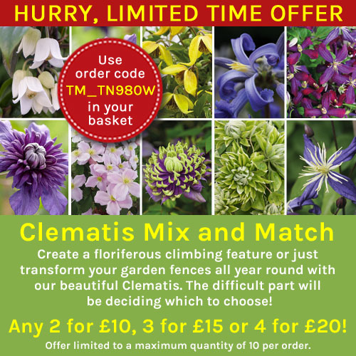 Clematis Mix 'n' Match
