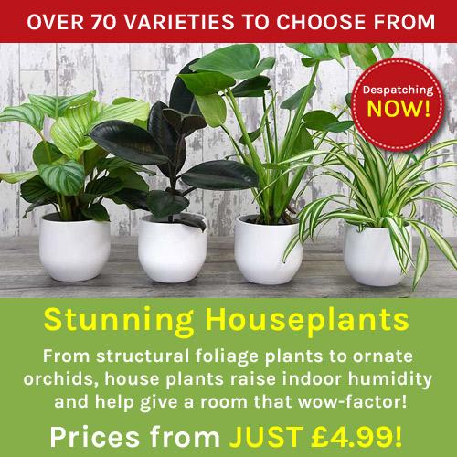 Buy Plants, Seeds, Fruit Trees & Seed Potatoes | Thompson