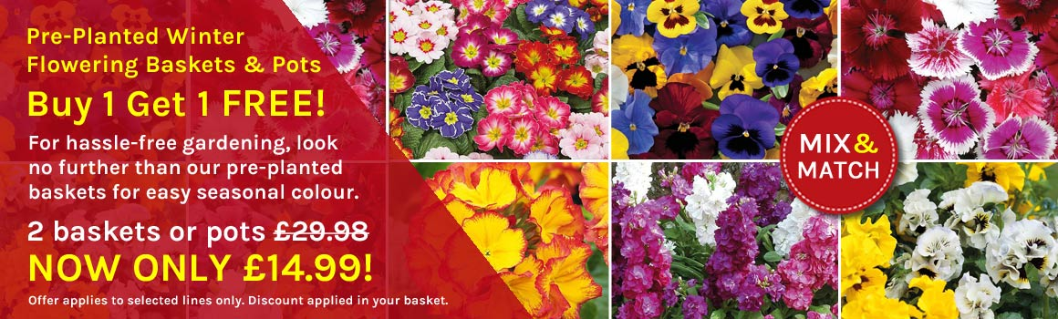 Pre-planted Baskets & Pots BUY 1 GET 1 FREE!