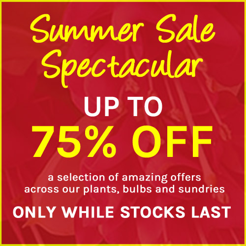 Summer Sale Spectacular