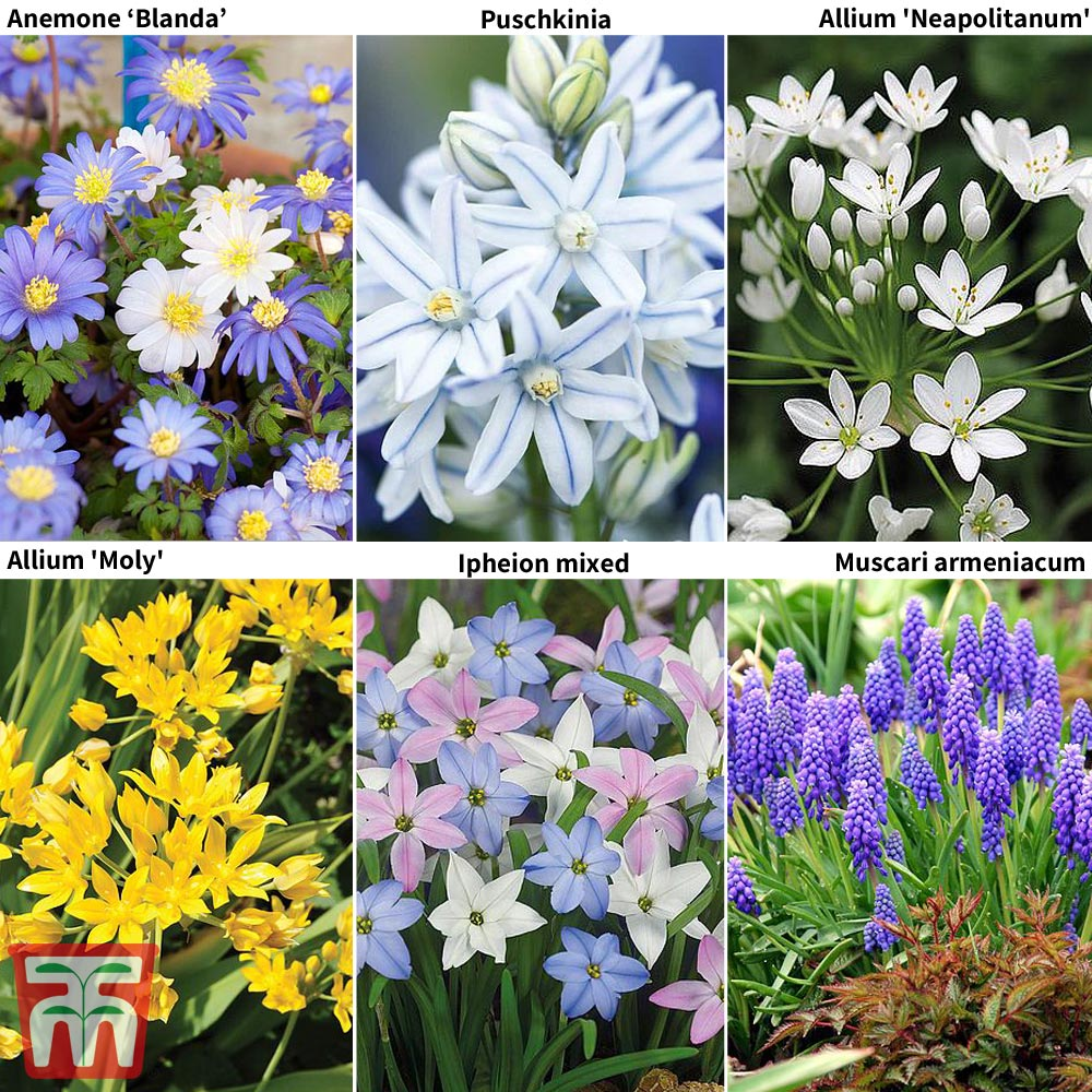 Image of 400 Spring Flowering Bulb Collection