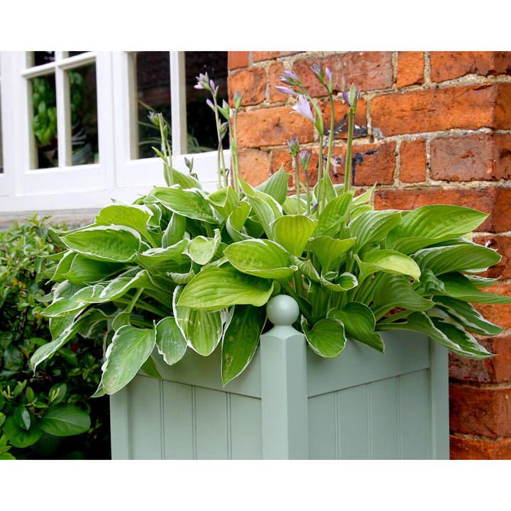 Image of Classic Planter 15 Heritage Sage