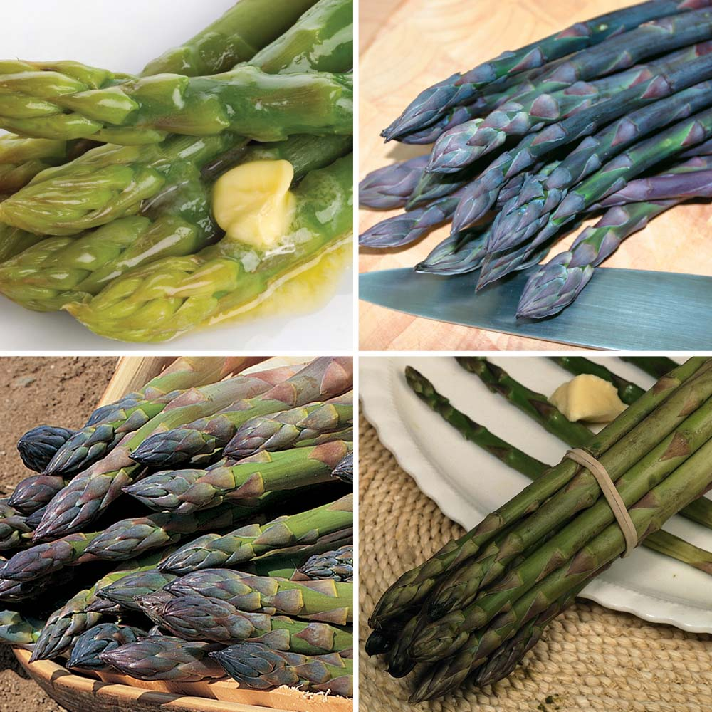 Image of Asparagus officinalis Collection (Spring/Autumn Planting)