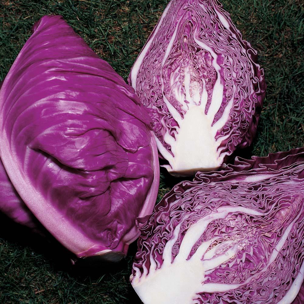 Image of Cabbage 'Kalibos' (Autumn)