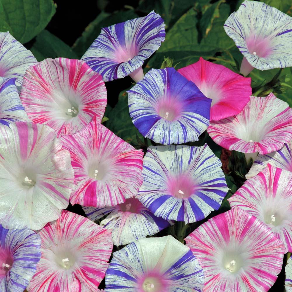 Цветы орша, купить цветы почтой по украине