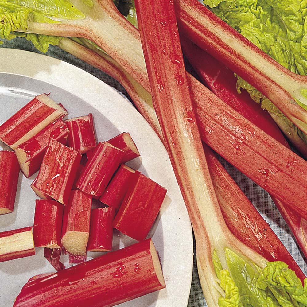Image of Rhubarb 'Glaskin's Perpetual'