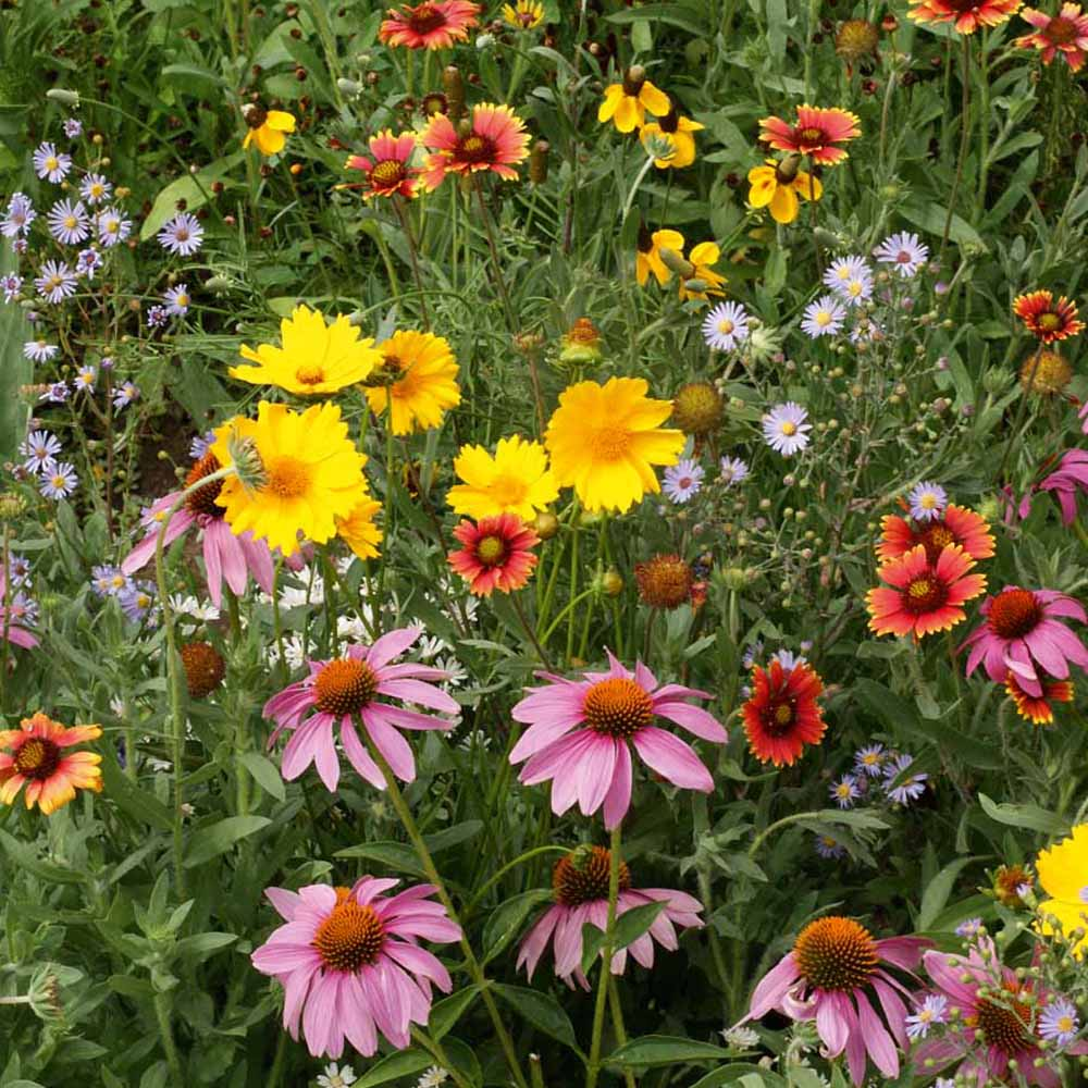 Image result for wildflower flower