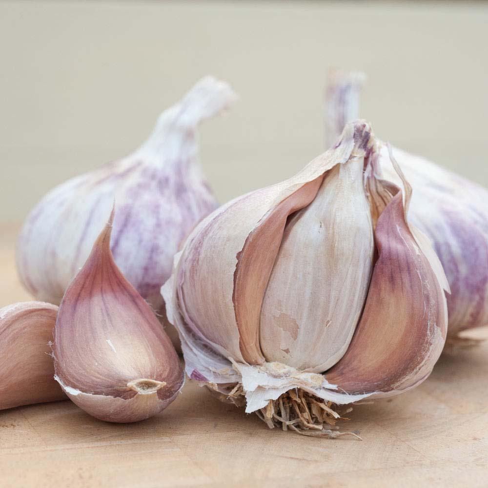 Image of Garlic 'Germidour' (Spring/Autumn Planting)