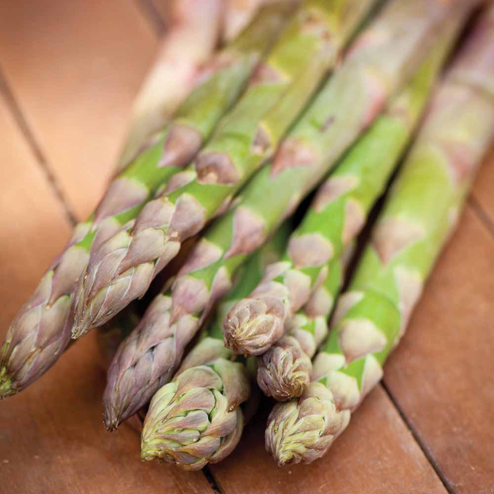 Image of Asparagus officinalis 'Guelph Millennium' (Spring/Autumn Planting)