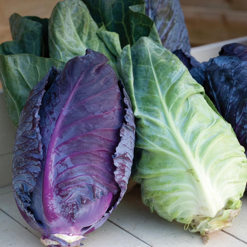 Image of Cabbage 'Colour Dual Mix' (Autumn/Winter)