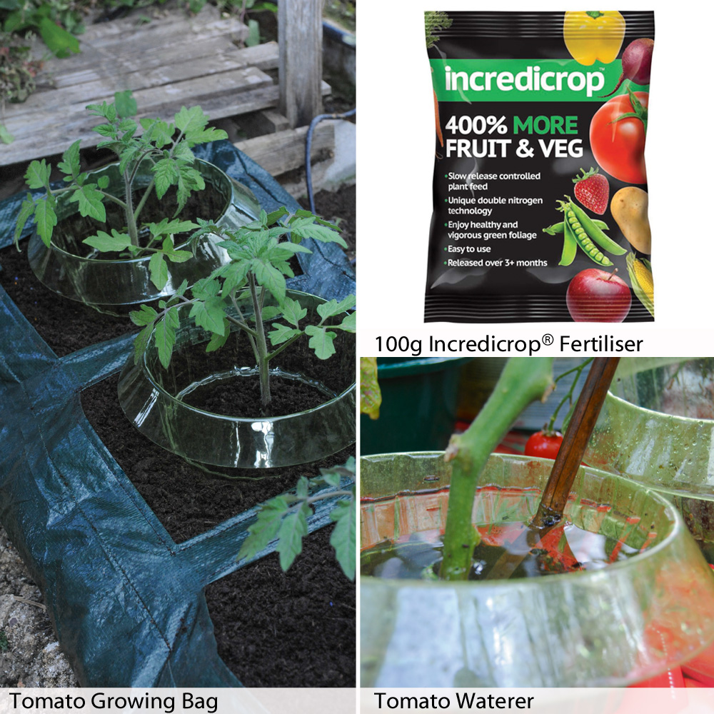 Image of Tomato Growing Essentials Kit