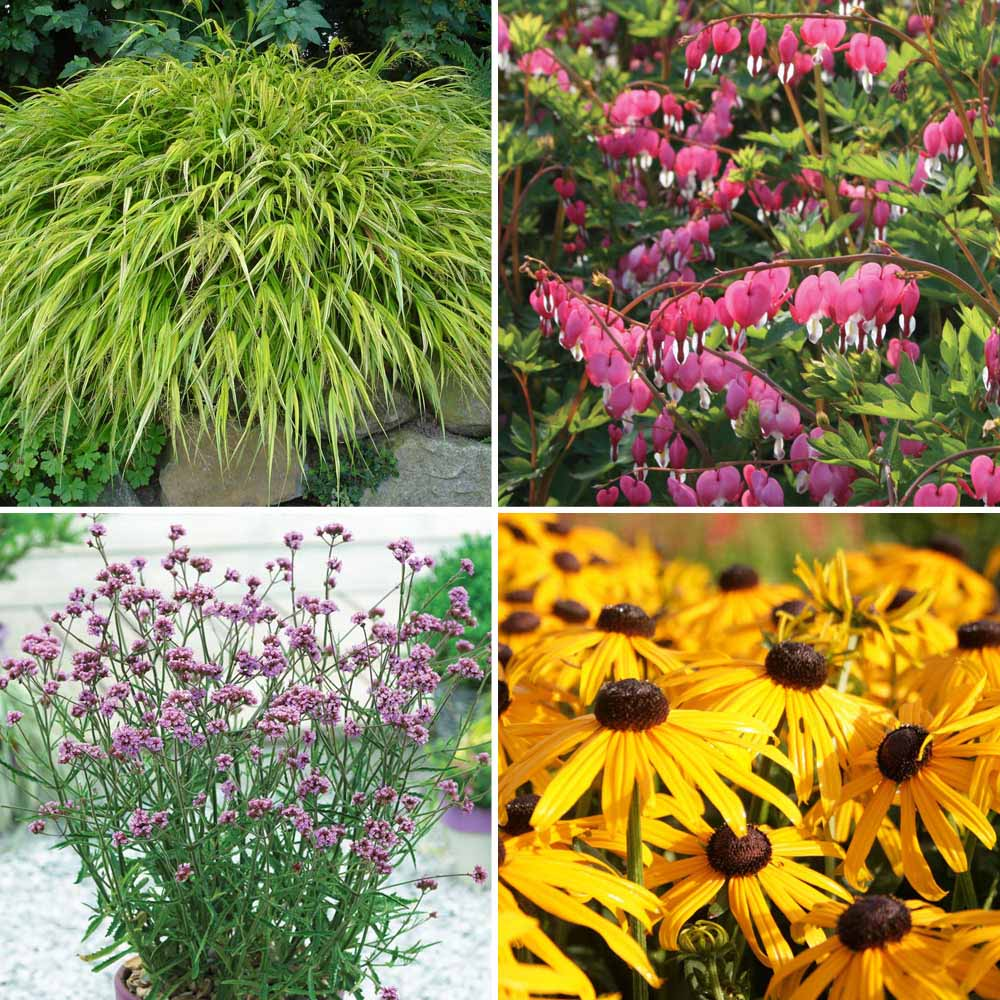 Image of Nurserymans Choice Large Plants (1 litre)