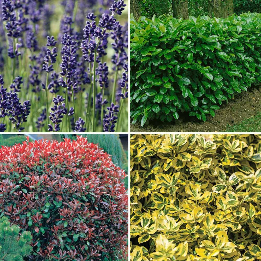 Image of Nurserymans Choice Large Plants (3-4 litre)