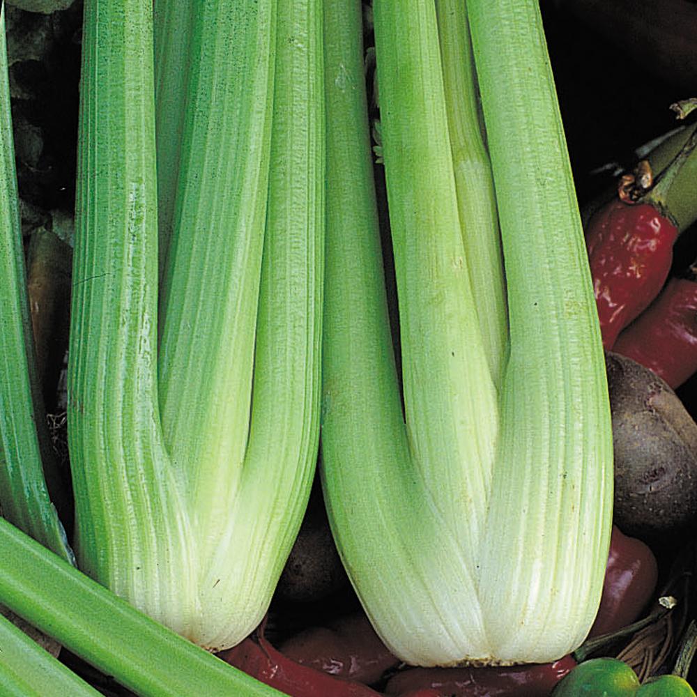 Image of Celery 'Victoria' F1 Hybrid
