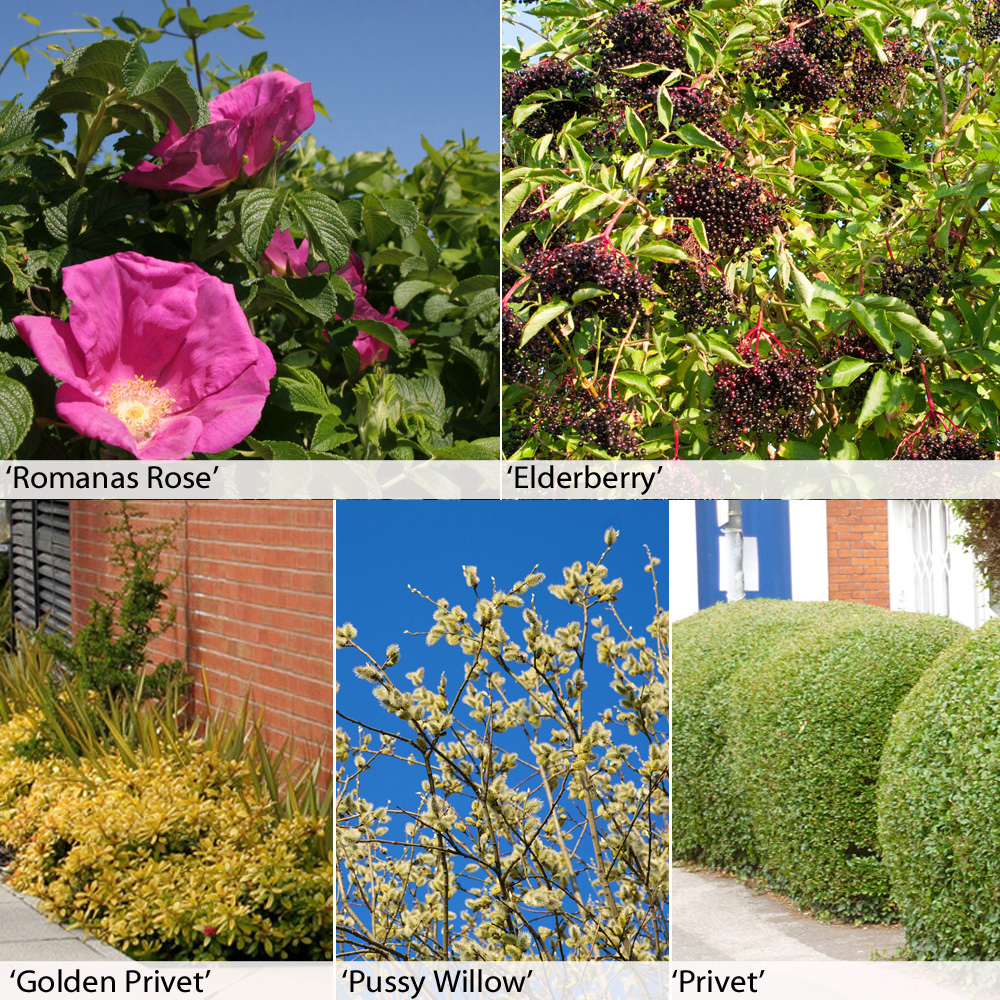 Image of Fast Growing Hedging Collection