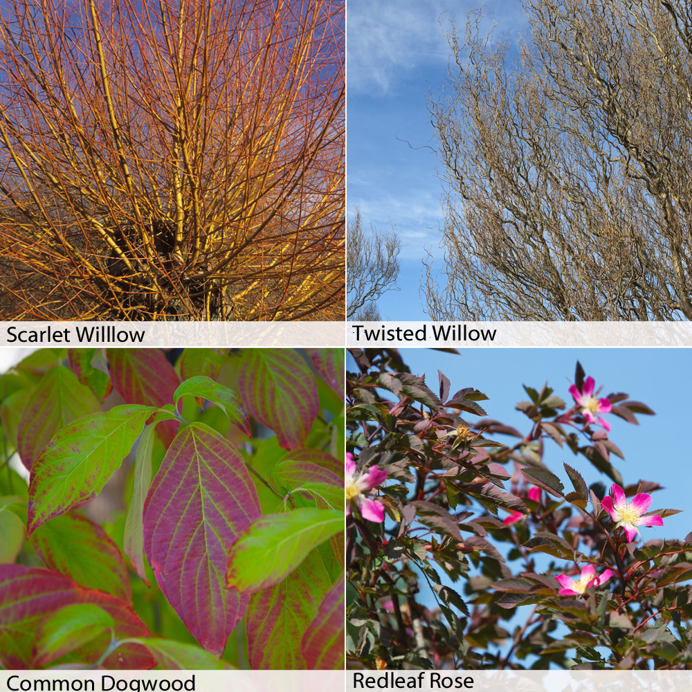 Image of Winter interest Hedging Collection