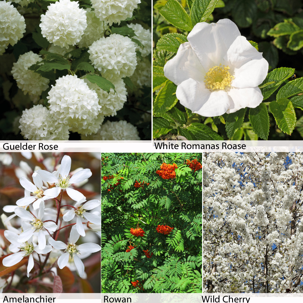 Image of Floral Hedging Collection
