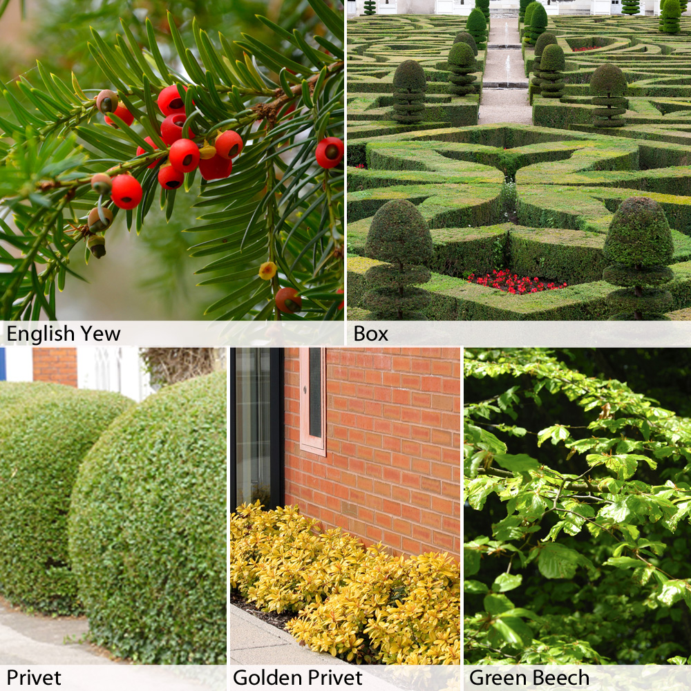 Image of Formal/Topiary Hedging Collection