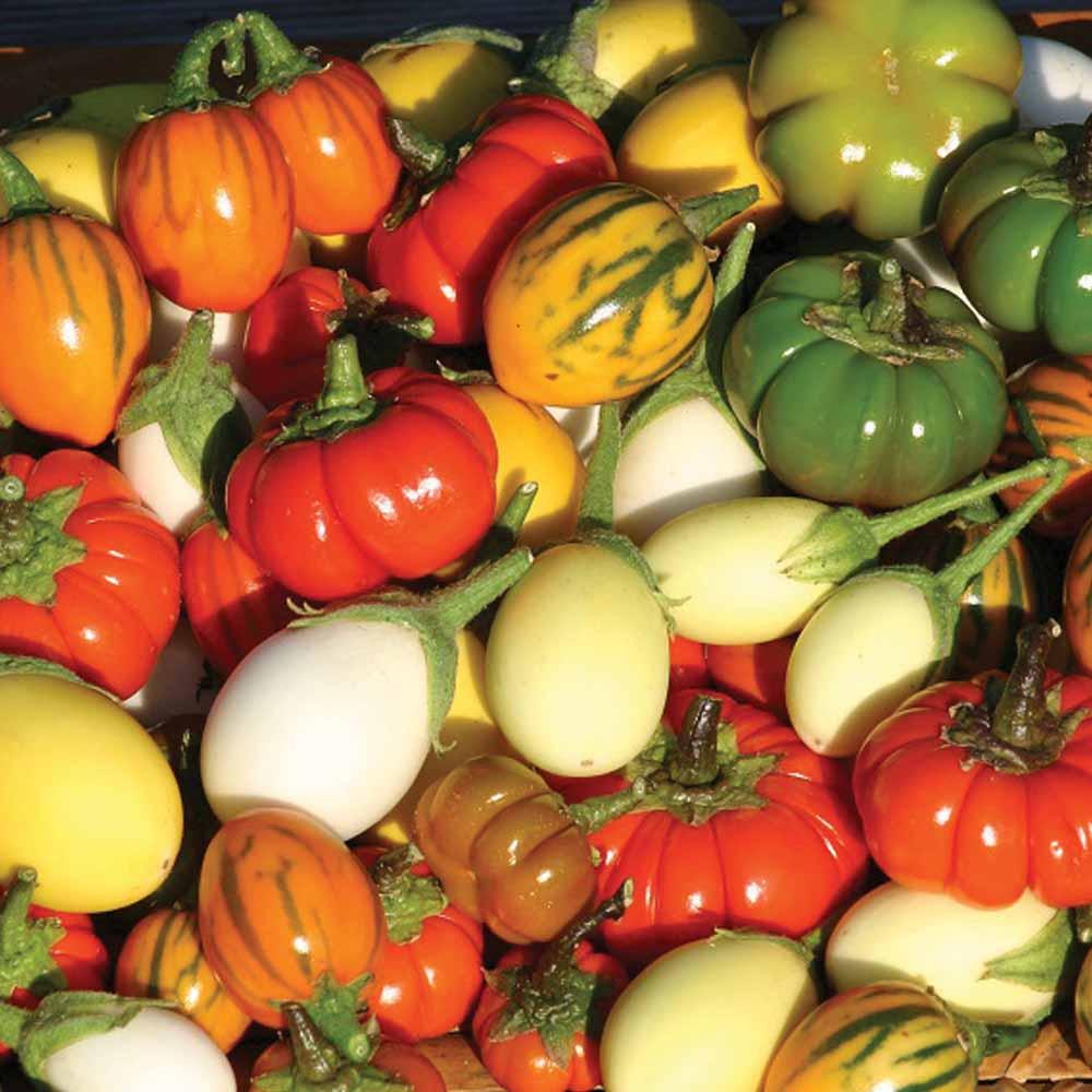 Image of Solanum 'Deco Fruits Mixed'