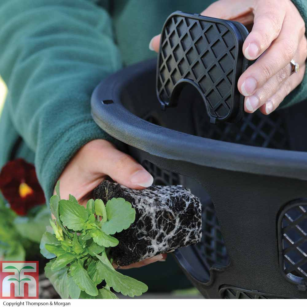 Image of New and Improved Easy Fill Hanging Basket