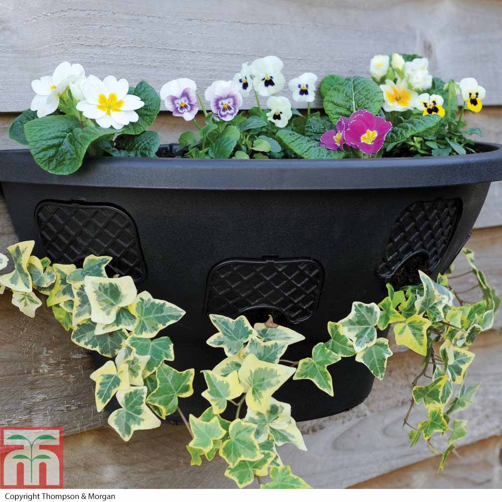 Image of Easy Fill Hanging Wall Planter