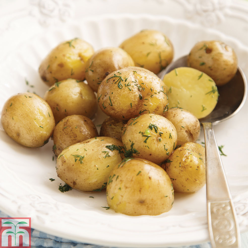Image of Potato 'Abbot'