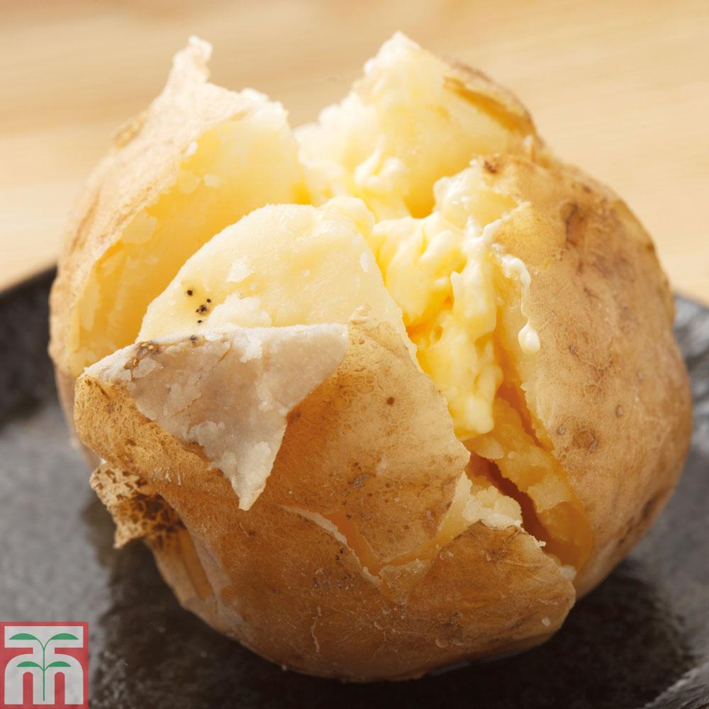 Image of Potato 'Cara'