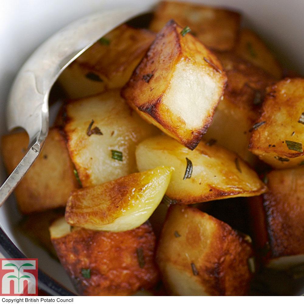 Image of Potato 'Golden Wonder'