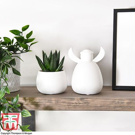 Image of Angie angel with plant and pot set