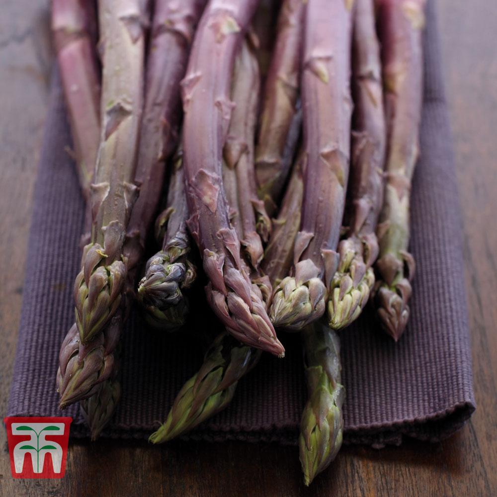 Image of Asparagus 'Burgundine' (Spring/ Autumn Planting)