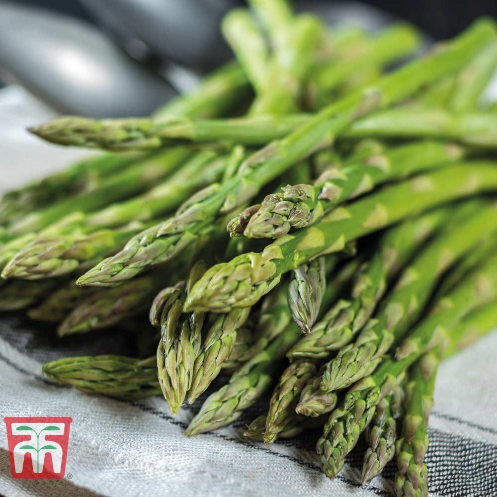 Image of Asparagus 'Gijnlim' (Spring/ Autumn Planting)