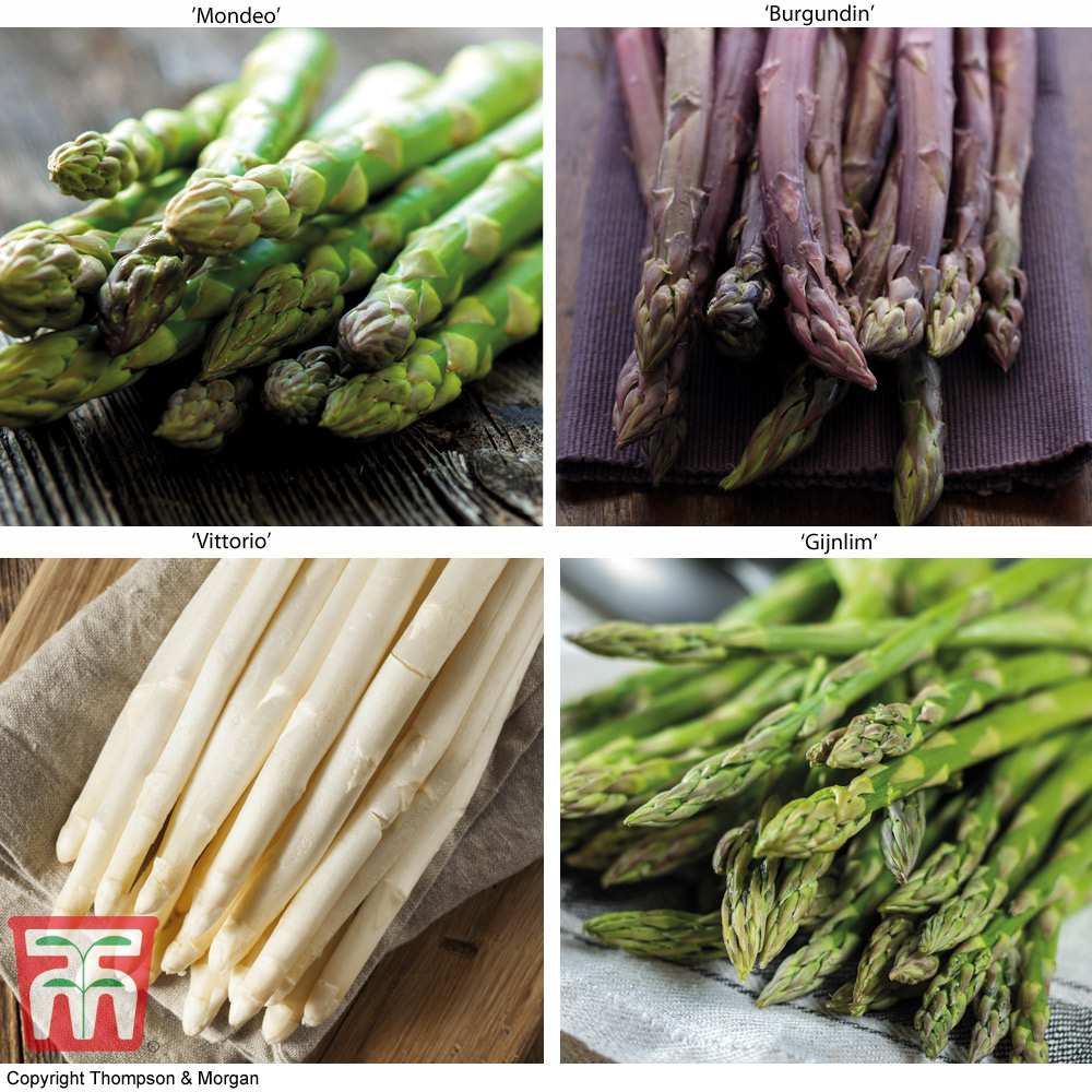 Image of Asparagus Collection (Spring/ Autumn Planting)
