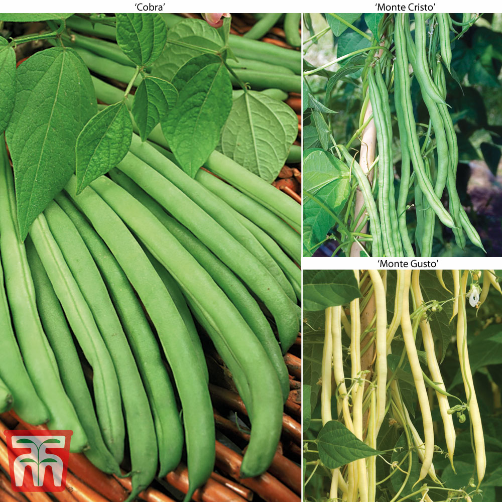 Image of Climbing Bean Collection