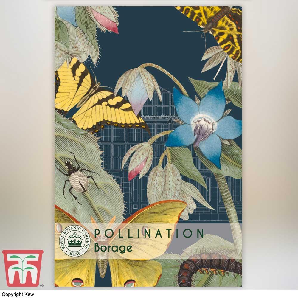 Image of Borage - Kew Pollination Collection