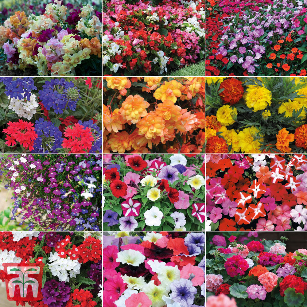 Image of Best Value Bumper Garden Ready Collection