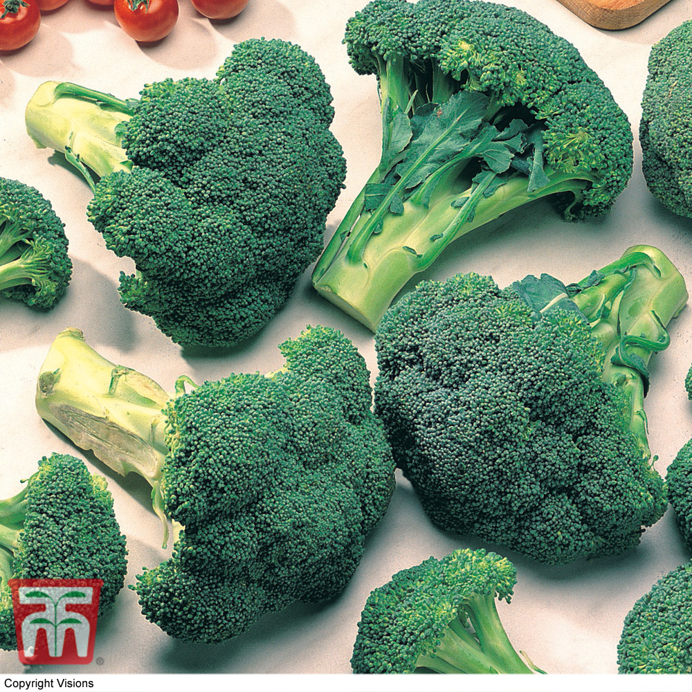 Image of Broccoli 'Marathon' (Calabrese)