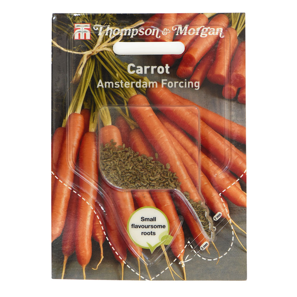 Image of Carrot 'Amsterdam Forcing' (Sow Clear)