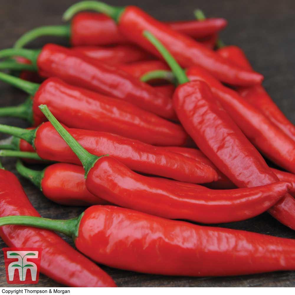 Image of Chilli Pepper 'Big Devil' (Hot)