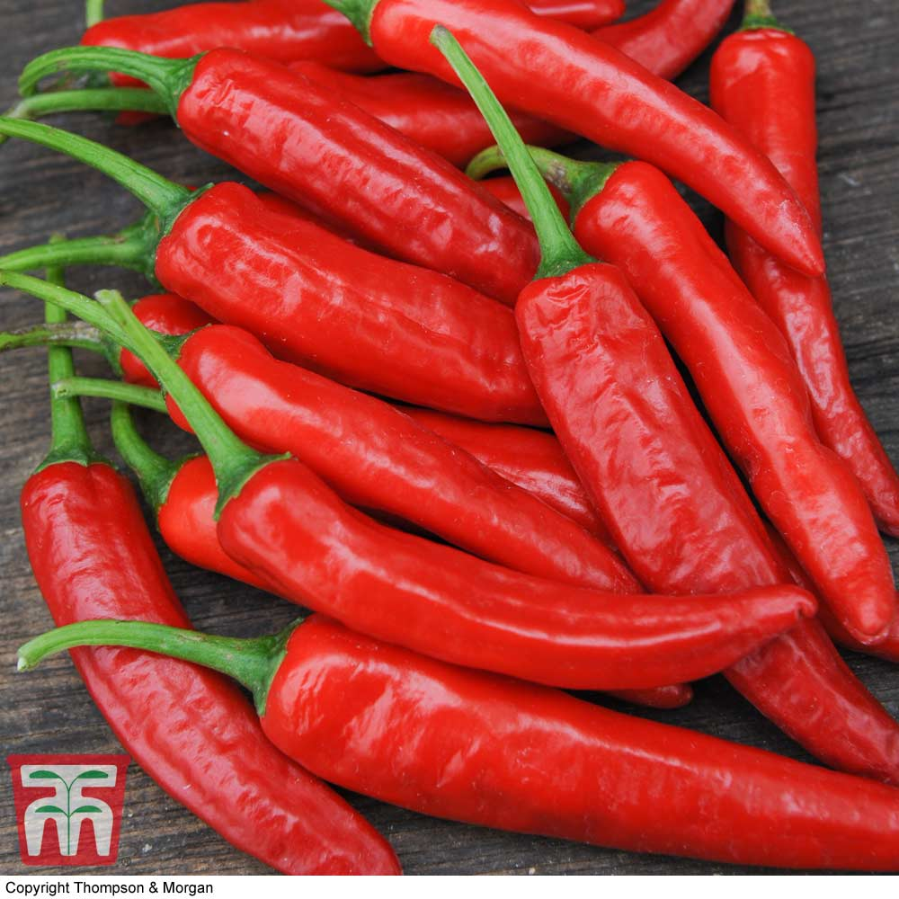 Image of Chilli Pepper 'Cayenne'