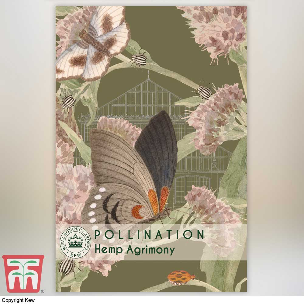 Image of Eupatorium cannabinum - Kew Pollination Collection