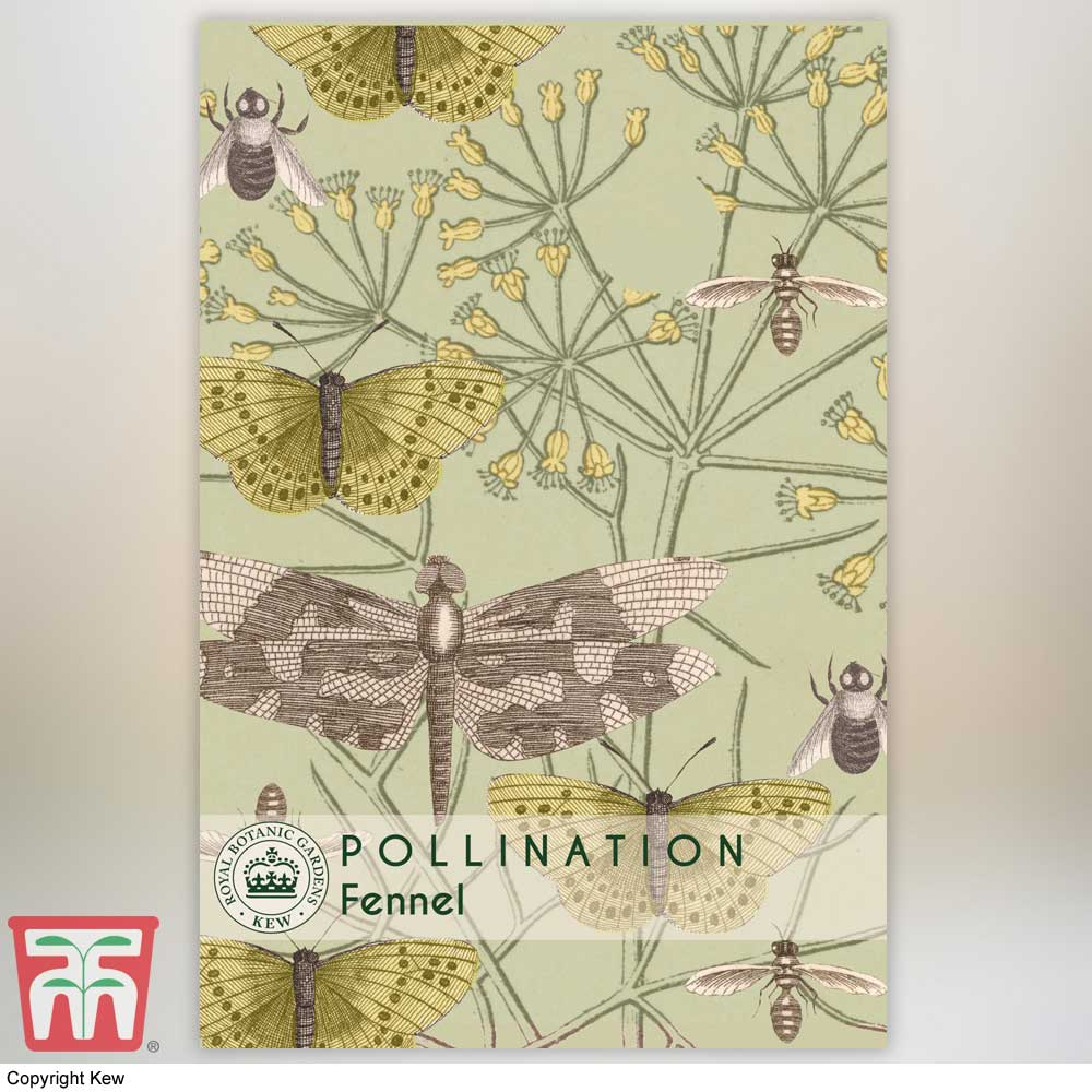 Image of Fennel - Kew Pollination Collection